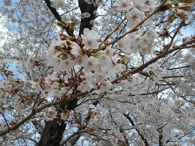 LP堤2021年4月2週目①.jpg