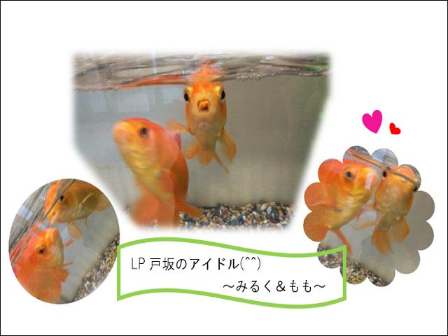 LP戸坂2021年7月16日⑥.png